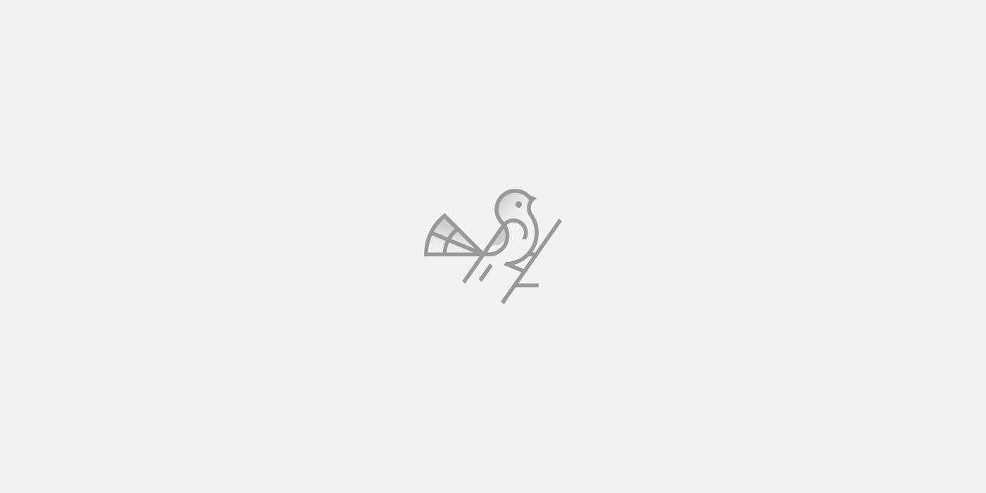Bird logo design - Dainogo